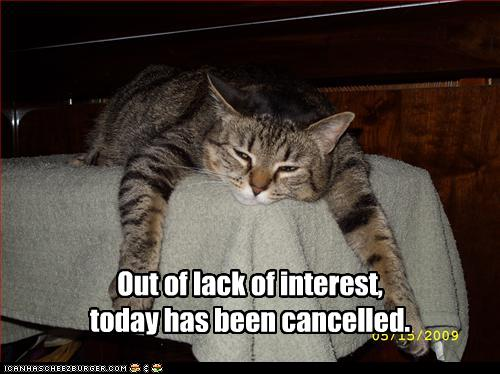 funny-pictures-cat-cancels-today