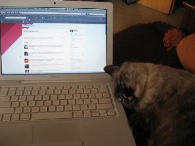 Twitter si Mika